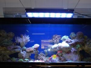 Освещение аквариума