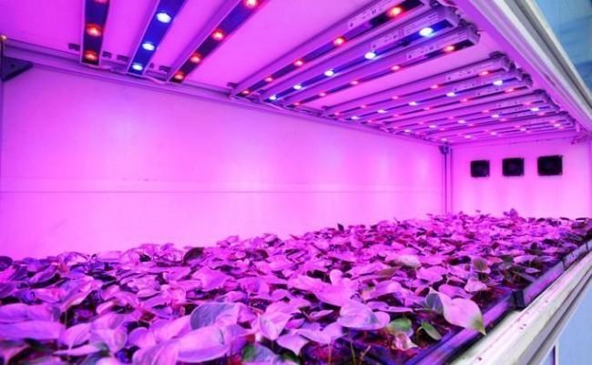 Как выбрать лампы для выращивания растений и сделать светильник для подсветки своими руками